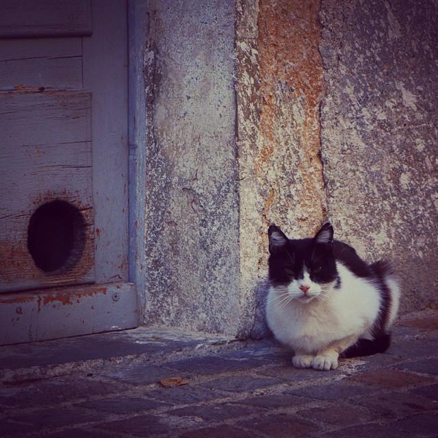 Chat dans les rues de Gabian