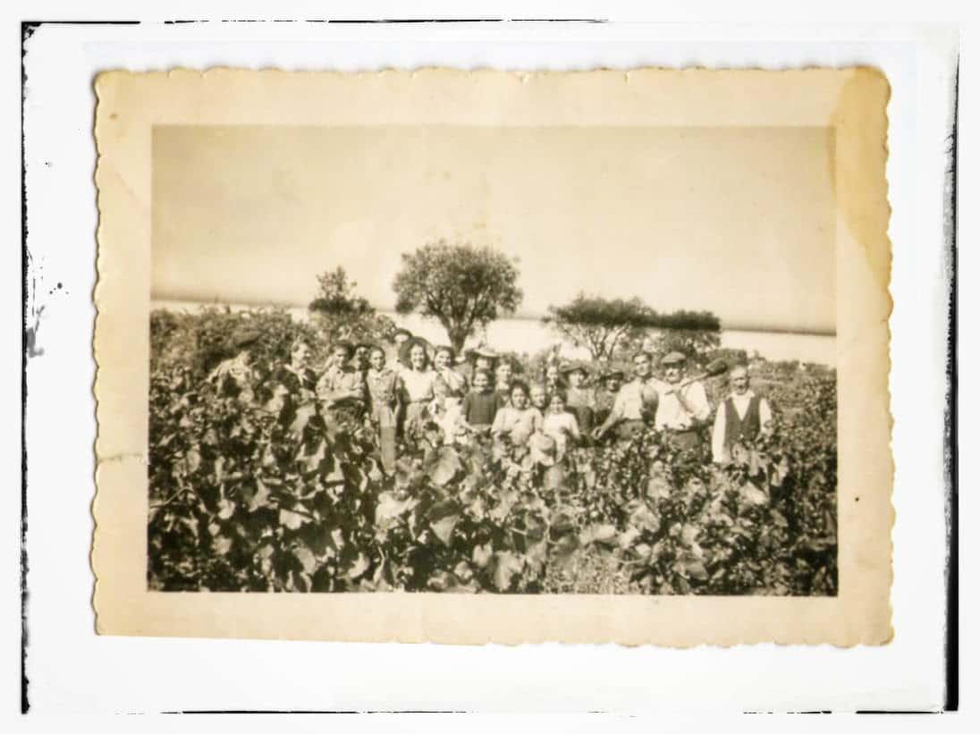 Dans les années 1940... déjà des vignes, déjà des hommes et des femmes.