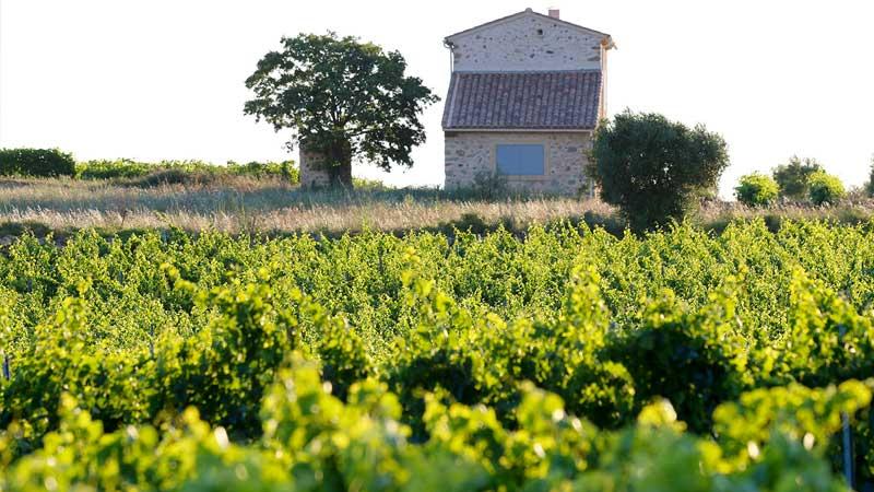 Vue sur les vignes du domaine Mas Farchat