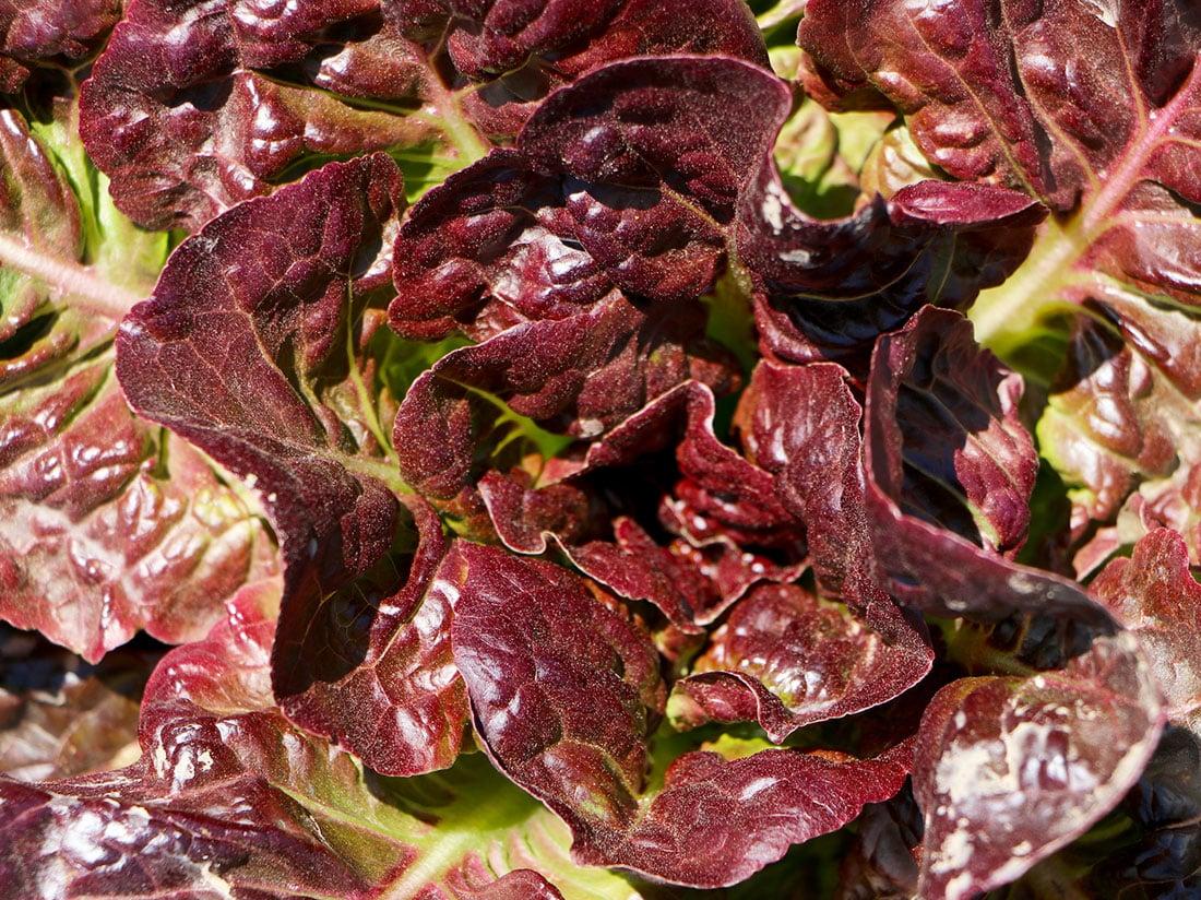 De beaux produits naturels issus du potager d'Hélène.