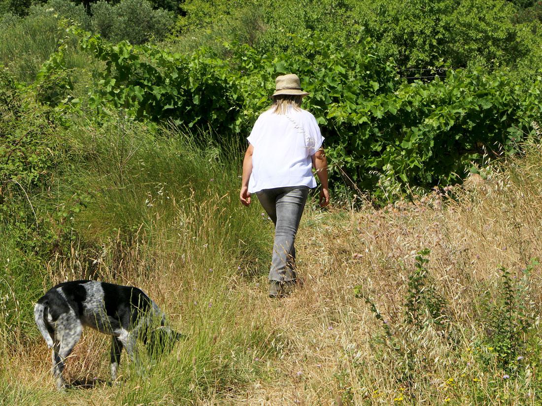 Promenade dans les vignes avec le chien Tattoo.