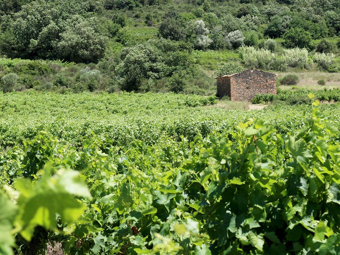 Paysage de vignes à perte de vue